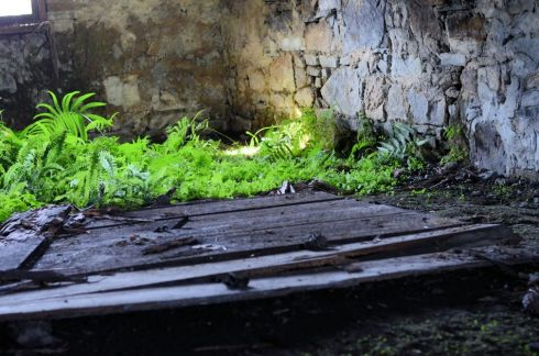 This picture was taken in the cellar. The ferns growing underneath the house, set against the rock foundation, were beautiful.